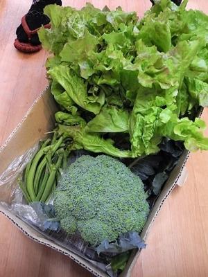 20170629採れたて野菜