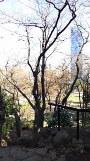 20161224芝浦から増上寺、新橋(その11)