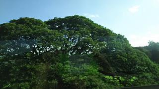 20170221日立の木(その3)