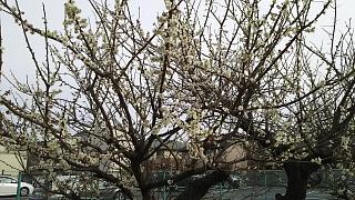 20170305新城~中原~小杉(その14)