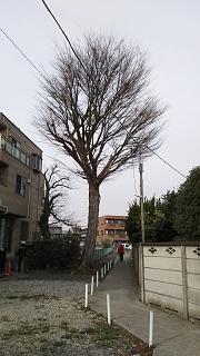 20170305新城~中原~小杉(その16)
