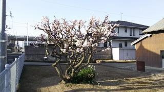 20170318高松中央IC~ニコレン(その8)