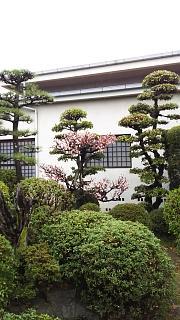 20170321中庭(その1)