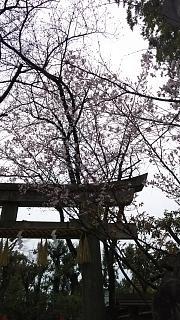 20170331車折神社(その9)