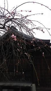 20170331車折神社(その13)