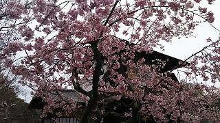 20170331渉成園(その10)
