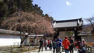 20170402醍醐寺(その1)