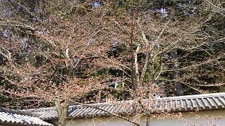 20170402醍醐寺(その2)