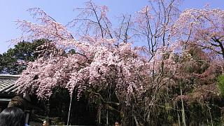20170402醍醐寺(その7)