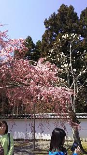 20170402醍醐寺(その10)