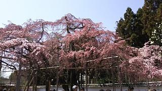 20170402醍醐寺(その11)