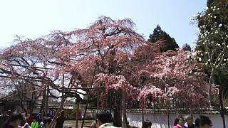 20170402醍醐寺(その12)