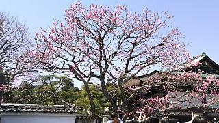 20170402醍醐寺(その14)