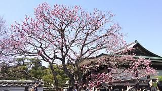 20170402醍醐寺(その15)