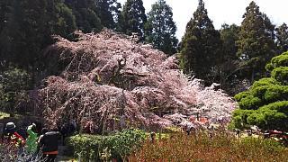 20170402醍醐寺(その18)