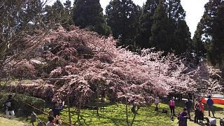 20170402醍醐寺(その20)