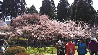 20170402醍醐寺(その22)