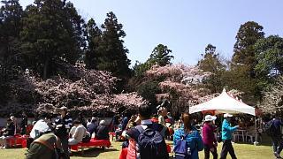 20170402醍醐寺(その23)
