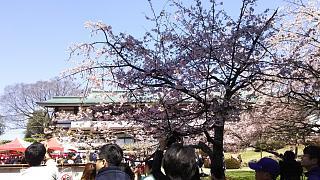 20170402醍醐寺(その29)