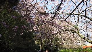 20170402醍醐寺(その31)