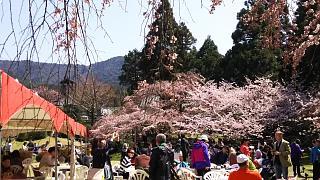 20170402醍醐寺(その36)