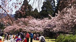 20170402醍醐寺(その37)