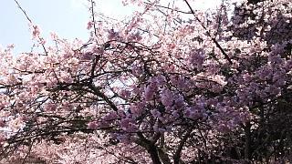 20170402醍醐寺(その38)