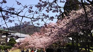 20170402醍醐寺(その39)