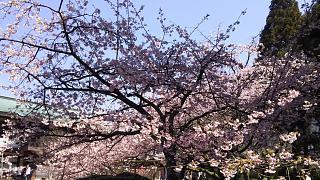 20170402醍醐寺(その41)