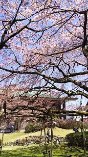 20170402醍醐寺(その44)
