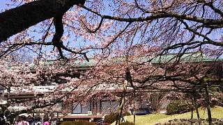 20170402醍醐寺(その45)