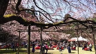 20170402醍醐寺(その46)