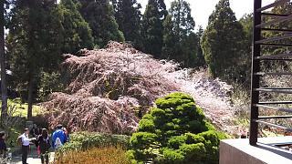 20170402醍醐寺(その47)