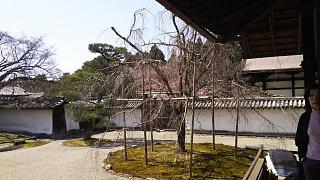 20170402醍醐寺(その49)