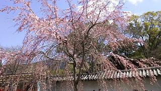 20170402醍醐寺(その62)