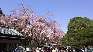 20170402醍醐寺(その63)