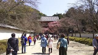 20170402醍醐寺(その64)