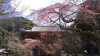 20170402醍醐寺(その65)
