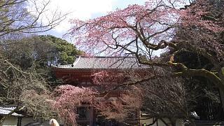 20170402醍醐寺(その66)