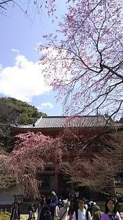 20170402醍醐寺(その67)
