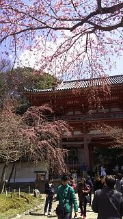 20170402醍醐寺(その68)