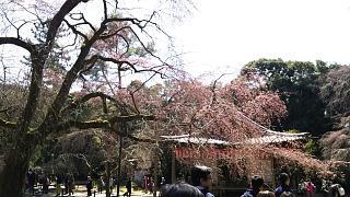 20170402醍醐寺(その69)