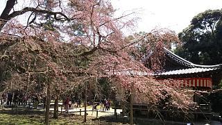 20170402醍醐寺(その70)