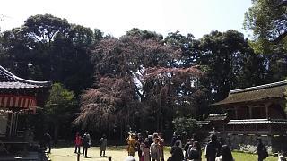 20170402醍醐寺(その71)