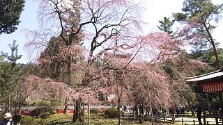 20170402醍醐寺(その72)