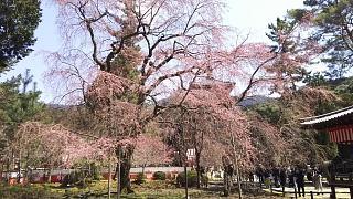 20170402醍醐寺(その73)