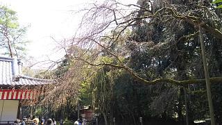 20170402醍醐寺(その74)