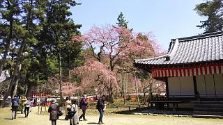 20170402醍醐寺(その75)