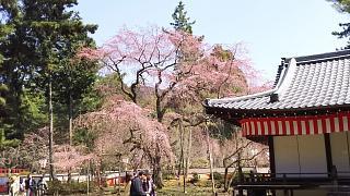 20170402醍醐寺(その76)