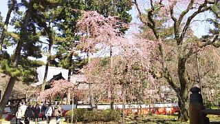 20170402醍醐寺(その77)